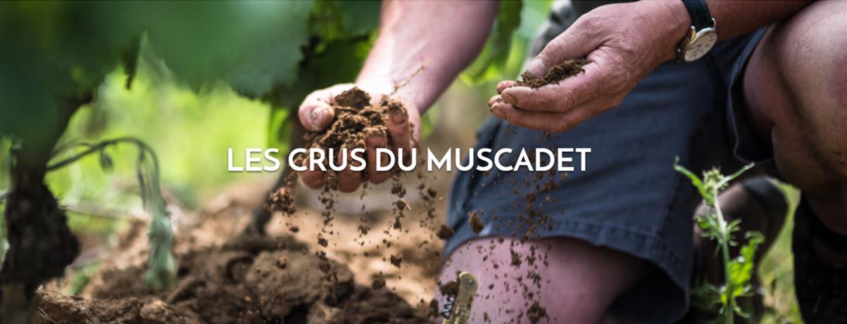 AOC Muscadet